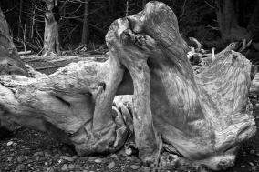 driftwoodrialto