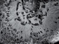 polyporusquamosus