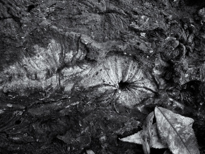 fallentreedetail
