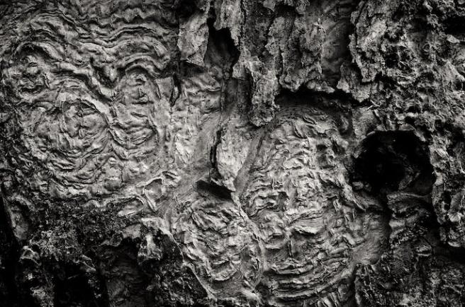 woodspirits