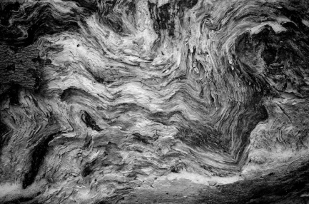 Chaos in Death, Decaying Beech Log