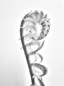 unfurlingfern5