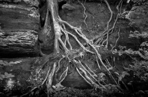 blackhand gorge roots