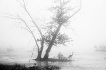 foggy morning, Killbuck Marsh