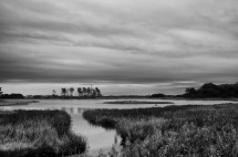 assateague island landscape