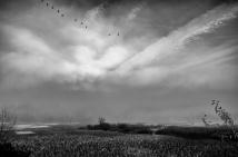 autumn morning, killbuck marsh