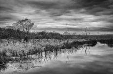 Clark Road wetlands