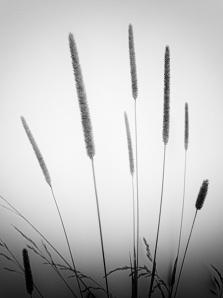 summergrasses2