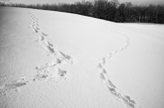 walkingthedog_checkingin