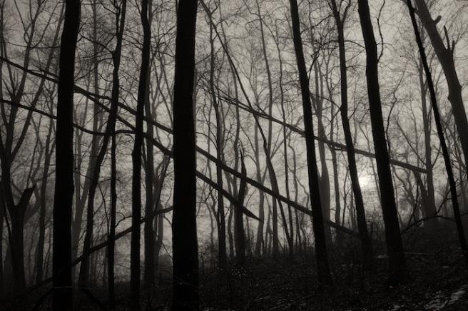 treesinthewood