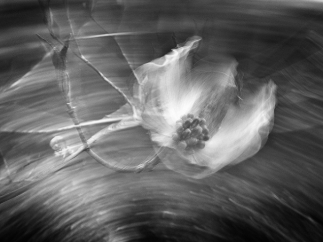 differentialmotionofflowers-1