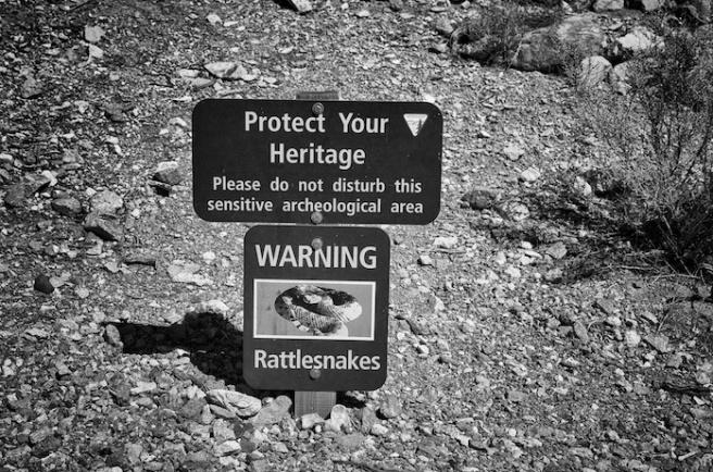protectedbysnakes