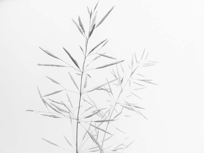 delicategrass-1