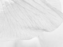 floralarrangements-3
