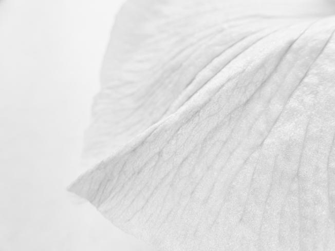 floralarrangements-4