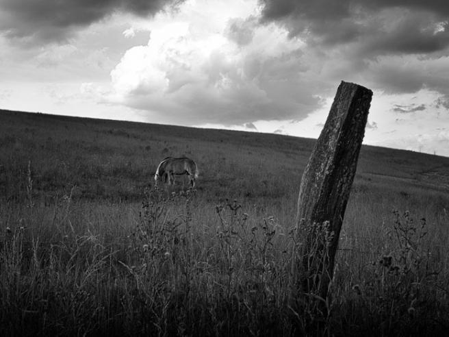 twohorses-1
