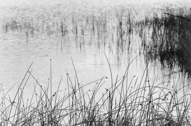 upmarshgrasses-1