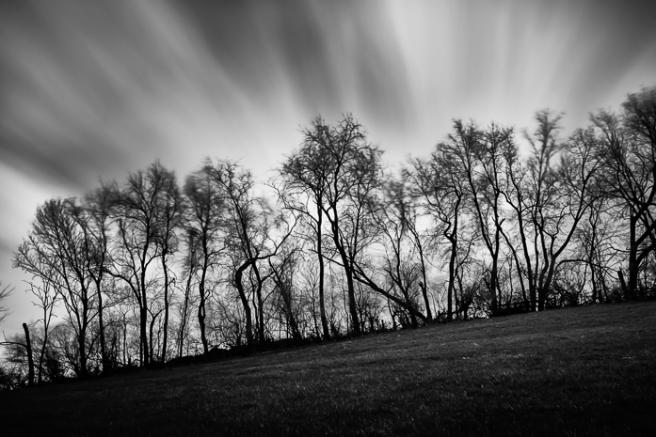 treesonthehillApr16
