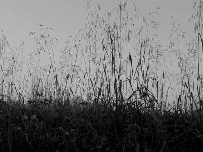 latesummergrassesAug16