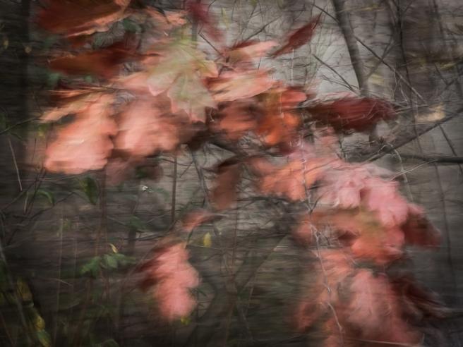 autumnleavesnov16