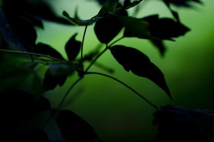greenJun17