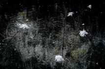 winterwonderland1LrgDec17