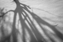 shadowlands2Jan18